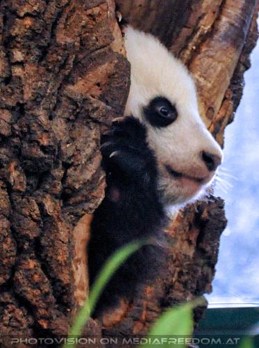 Kleiner großer Panda 09: Fu Bao