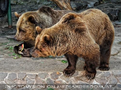 Die Braunbären 3