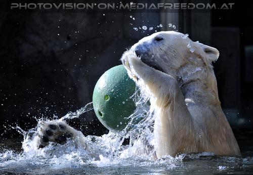 Eisbären Gaude 06