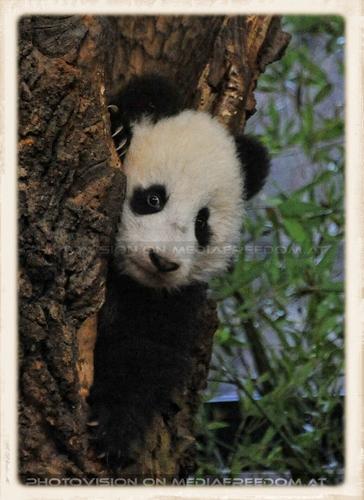 Fu Bao geht schlafen No.5: Fu Bao