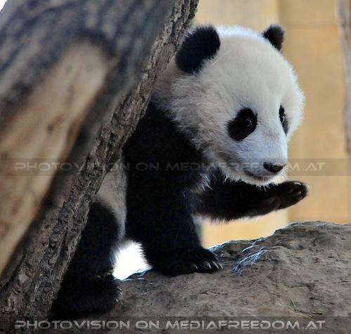 Fu Bao - auf wiedersehen: Fu Bao