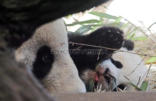 Kuschelbär: Panda - Fu Long