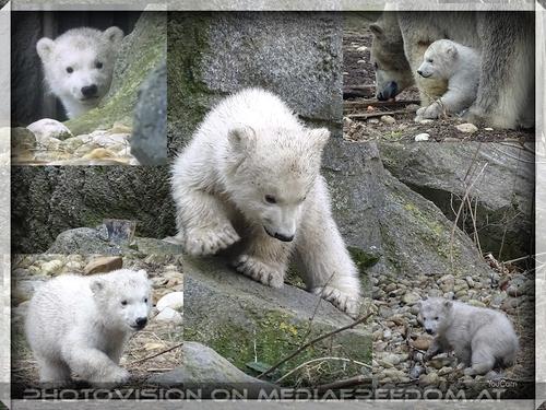 Bärige Liebesgrüße zum Valentinstag vom kleinen Zoostar...
