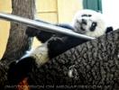 Relaxter Baby Panda Fu Hu
