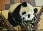 Hallo kleiner Fu Hu