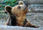 Braunbären 5