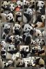 Großer Pandaspaß