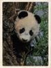 Fu Bao geht schlafen No.6