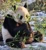 Mein Bambus