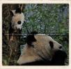 Fu Bao geht schlafen No.3