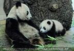 Mama mit Panda Baby