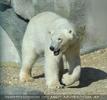 Der zweite Blick in die neue Eisbärenanlage