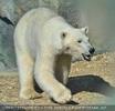 Der erste Blick in die neue Eisbärenanlage