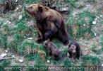 Bärenfamilie 2