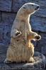 Bettelnder Eisbär