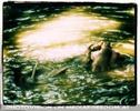 Braunb�r badet