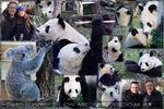 Willkommen Bunji, lebt wohl Fu Feng und Fu Ban