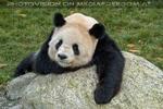Bei den großen Pandas 2