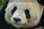 Bei den großen Pandas 3
