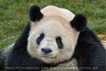 Bei den großen Pandas 4
