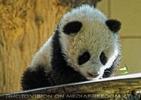 Welcome Panda Fu Long 05