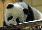 Welcome Panda Fu Long 07