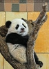 Großer Panda - kleiner Fu Long 01