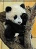 Großer Panda - kleiner Fu Long 02