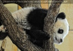 Großer Panda - kleiner Fu Long 03