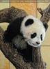 Großer Panda - kleiner Fu Long 05