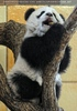 Großer Panda - kleiner Fu Long 06