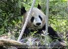 Die großen Pandas 3