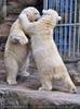 Eisbären 7