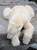 Eisbären Familie 30