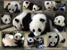 Panda Silvesterparty