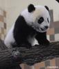 Kleiner Fu Hu