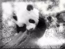 Pandababy spielt
