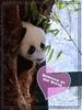 Panda Baby 04