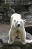 Hallo Eisbär