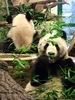 Pandas privat