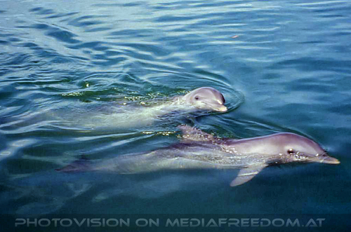 Dolphin Research Center 05