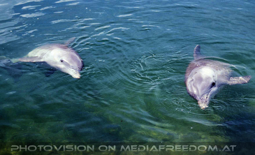 Dolphin Research Center 14