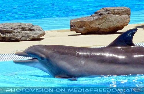 Dolphin Show 01