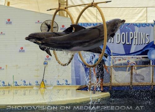 Dolphin Show 06
