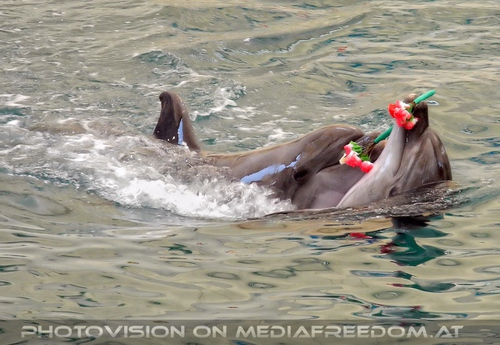 Dolphin Show 07