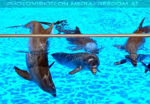 Dolphin Show 09