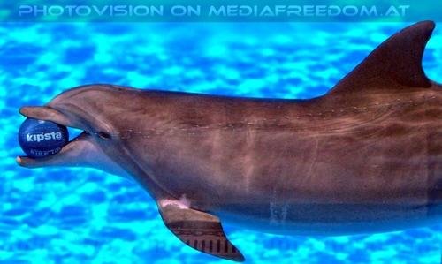 Dolphin Show 14