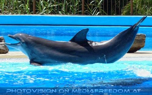 Dolphin Show 17