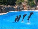 Delfin ballett