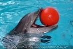 Die Zukunft heißt DelphinLagune 44
